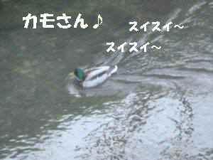 20100404_001_11