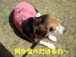 20100404_051_19