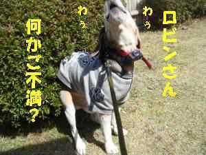 20100404_059_111