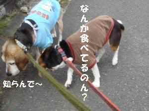 20100405_030_16