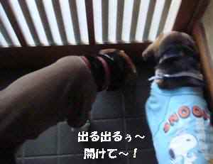 20100406_001_11