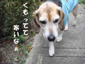 20100407_003_11
