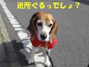 20100410_028_11