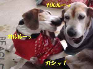 20100410_047_19