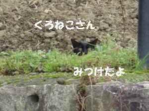 20100411_004_11