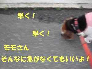 20100413_022_19