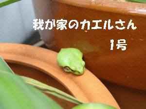 20100414_014_14