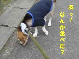 20100415_039_16
