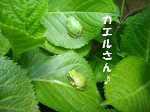 20100501_022_14