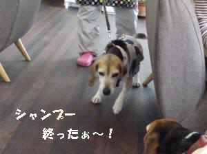 20100504_040_17