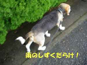 0820100619_010_1