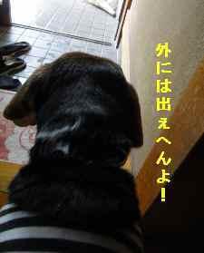 Dsc01607_1_1